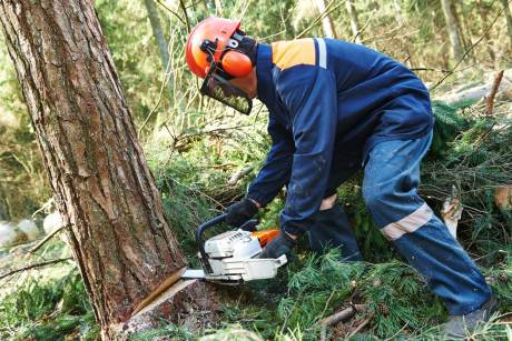 arborlife tree surgeons surrey