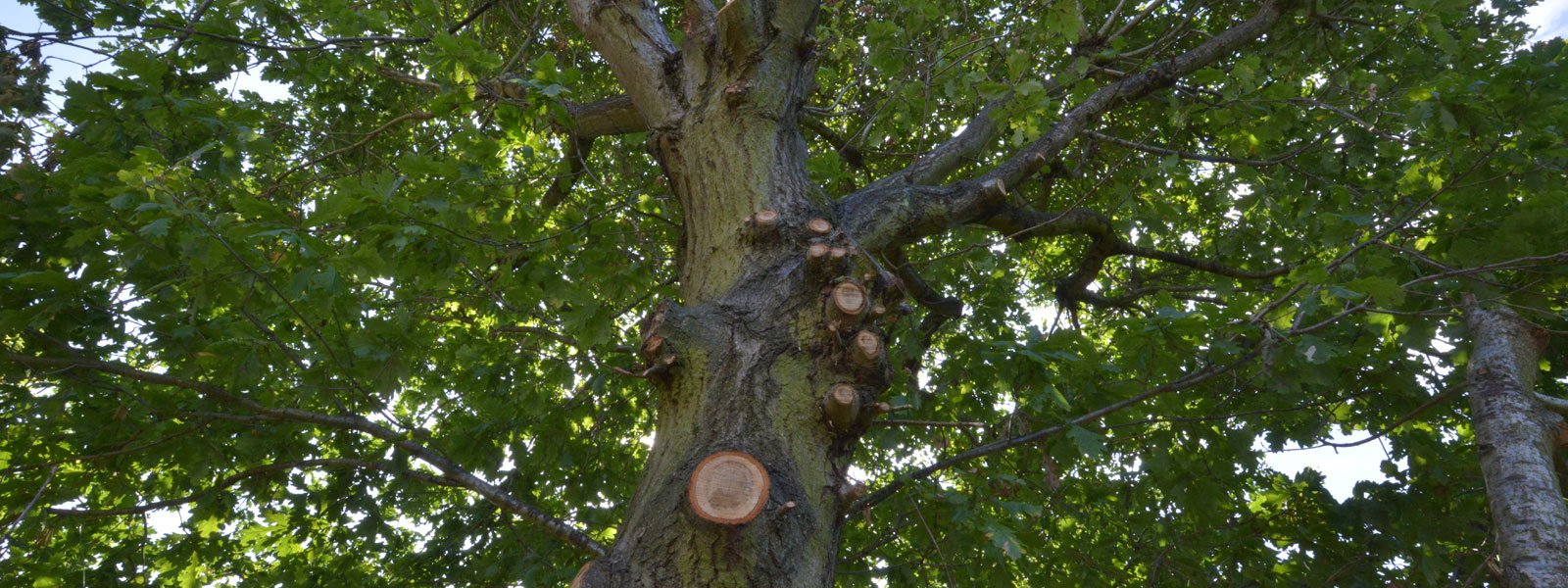 Cobham Tree surgeons Arborliffe