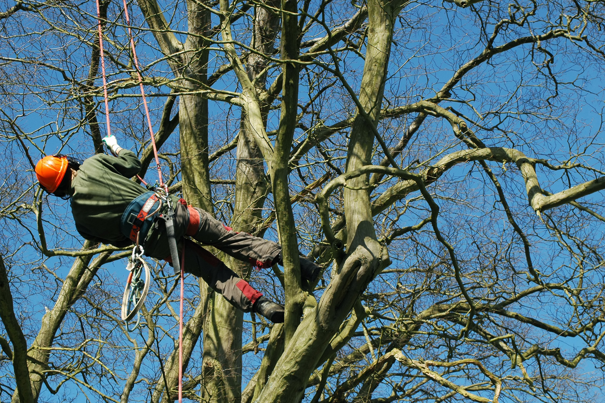 surrey tree felling surgeons cobham
